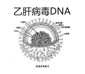 乙肝患者是否需要检查乙肝DNA?